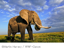 Margin Harvey / WWF-Canon