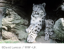 David Lawson / WWF-UK