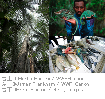右上 cMartin Harvey / WWF-Canon 左 cJames Frankham / WWF-Canon 右下 cBrent Stirton / Getty Images