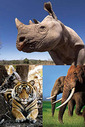 20120723Wildlife_Crime_Scorecard.jpg