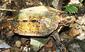 130308Ryukyu-Turtle-web-Taku-Sakoda.jpg