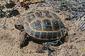121210Horsfields-Tortoise.jpg