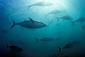 131028southern-blue-fin-tuna.jpg