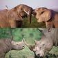 141007_elephant_rhino.jpg