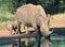 160922white-rhino.jpg