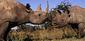 170227Black-rhinos-Martin-Harvey-WWF-Canon-820.jpg