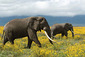 170710_elephant.jpg