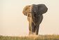 180102_Elephant.jpg