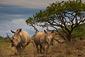 180131_Rhino.jpg