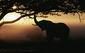 180201_Elephant.jpg
