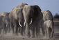 180209_Elephant.jpg