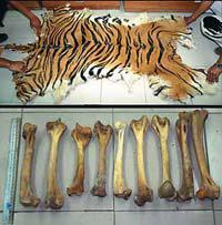 080213_Tiger-parts.jpg