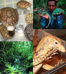 右上cMartin Harvey / WWF-Canon、左下cMauri Rautkari / WWF-Canon