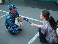 100702snifferdog_NPervushina.jpg